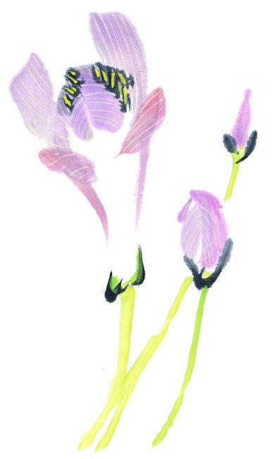 【jpg】国画手绘花卉作品