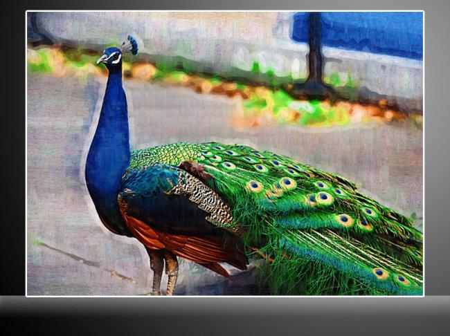 孔雀油画 动物油画 户外油画图片