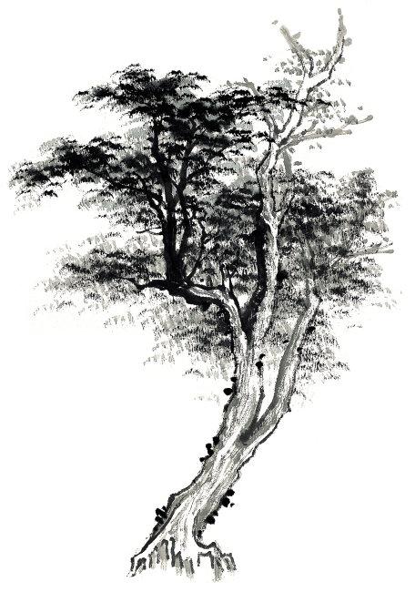 墨韵 中国书画 气势 气韵 境界 树艺术画 绘画 水墨画 插画 松树 松叶