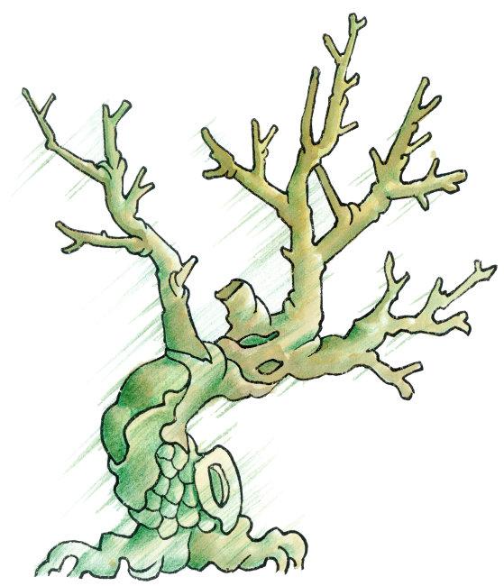 卡通植物画-其它-其他