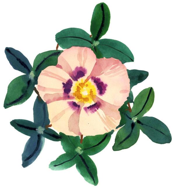 首页 正版设计稿 其他 其它 >水彩花卉    下载地址:点击下载将进入