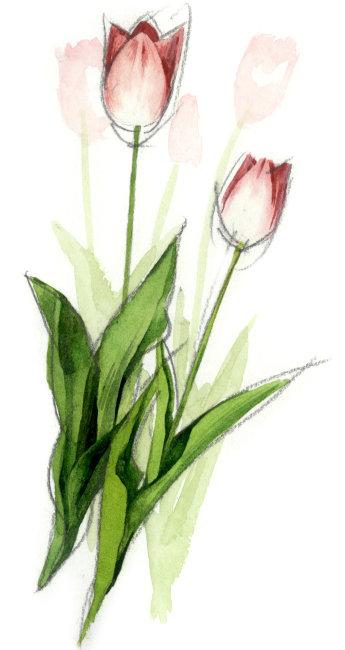 康乃馨画手绘图片
