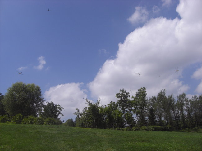 蓝天白云绿草大树