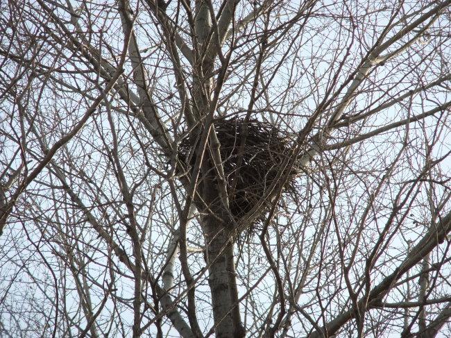 树上的鸟窝