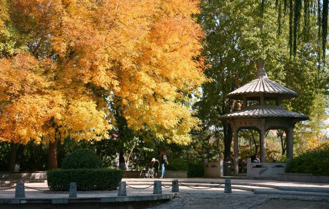 mb  公园 玲珑公园 树木 植物 叶子 树叶 彩叶 红叶 秋季 特写