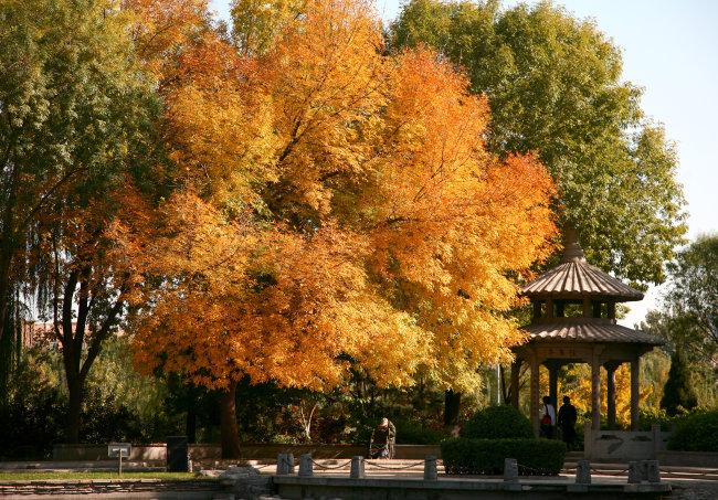 兆  公园 玲珑公园 树木 植物 叶子 树叶 彩叶 红叶 秋季 特写