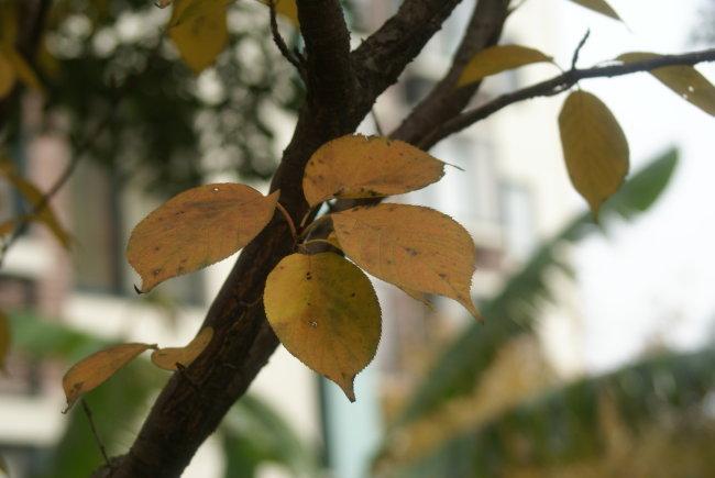 秋天 秋天背景 秋天图片 秋天风景 秋天色彩 秋天的图片 树叶 树叶的