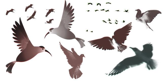 107 兆  飞行的鸟 飞行的海鸟 各种形态的鸟