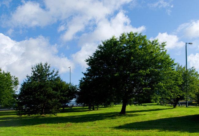 蓝天白云绿树草地