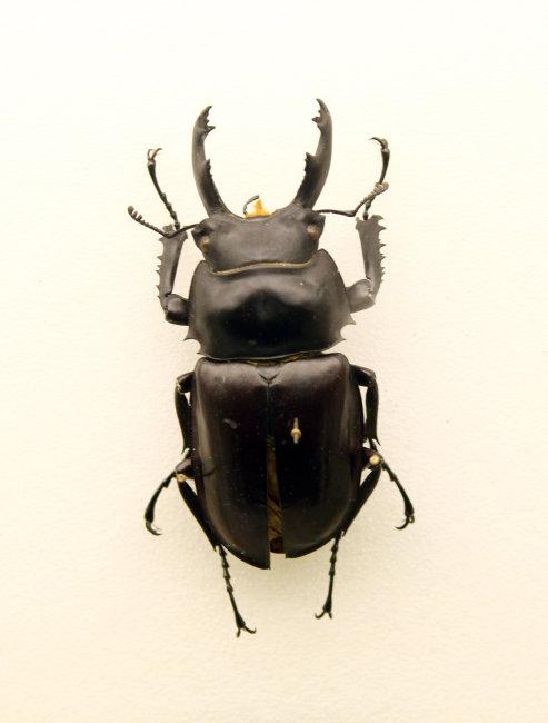 科普 教育基地 北京 朝阳区 展览 展品 馆藏 标本 昆虫 动物 甲壳虫