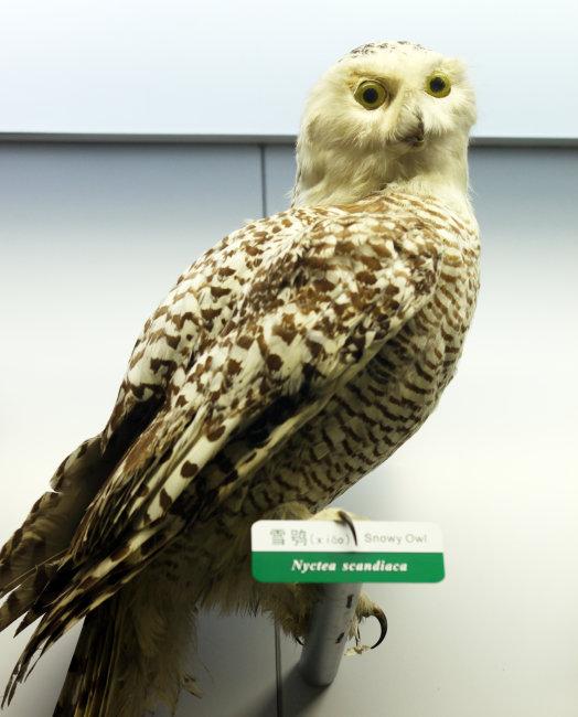 科普 教育基地 北京 朝阳区 展览 展品 馆藏 标本 动物 鸟类 飞禽 雪