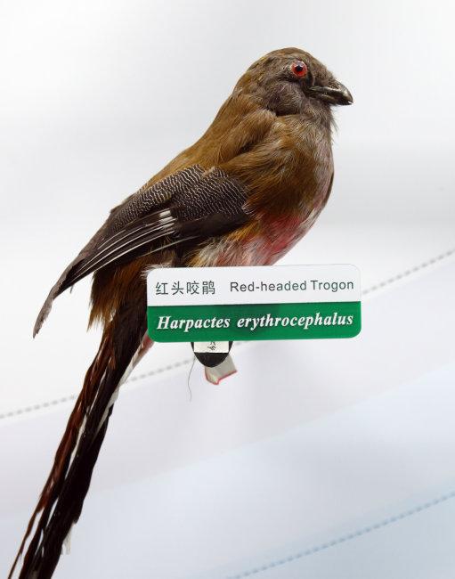 科普 教育基地 北京 朝阳区 展览 展品 馆藏 标本 动物 鸟类 飞禽