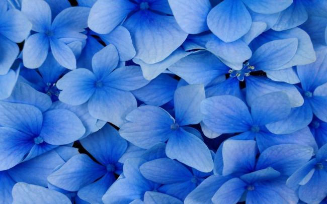 蓝色欧式墙纸贴图
