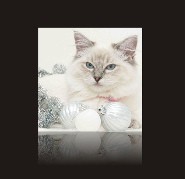 可爱的小猫 猫咪-动物图案无框画-无框画