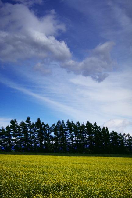 869 兆  天空 草地 树林 背景 背景图片 设计素材 图片背景