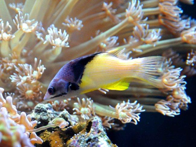 海底世界/热带鱼