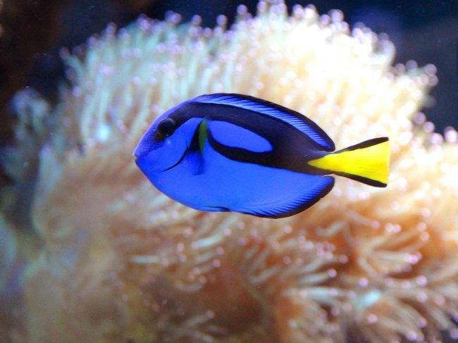 海洋 热带鱼; 名称:海底世界; 蓝宝石摄影图_热带鱼_鱼类; 图片