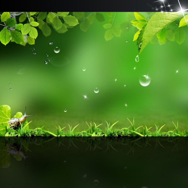 背景 壁纸 绿色 绿叶 树叶 植物 桌面 650_650