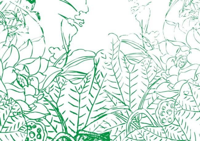 绿色莲叶子手绘画