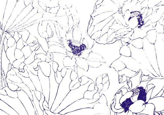 纯洁小荷莲-手绘画