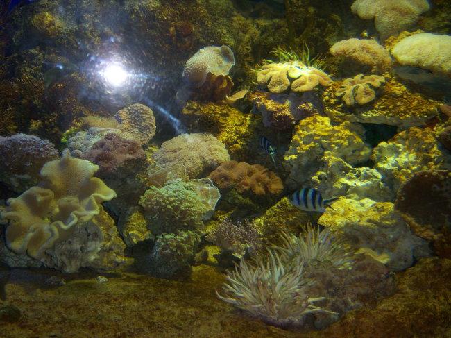 图片名称:海底世界