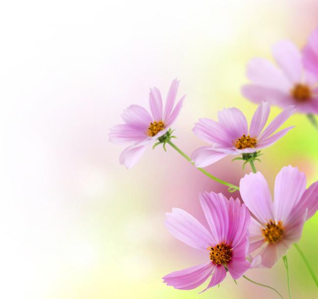高清鲜花背景图片下载