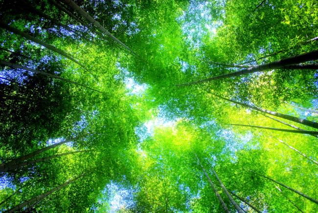 343 mb  竹林 风光 蓝天 绿叶图片