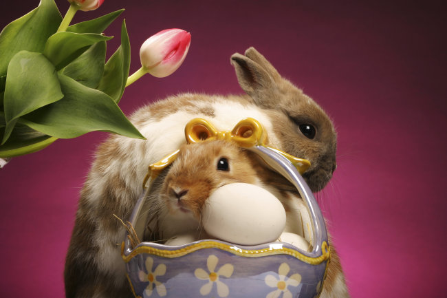 可爱兔子素材图片下载