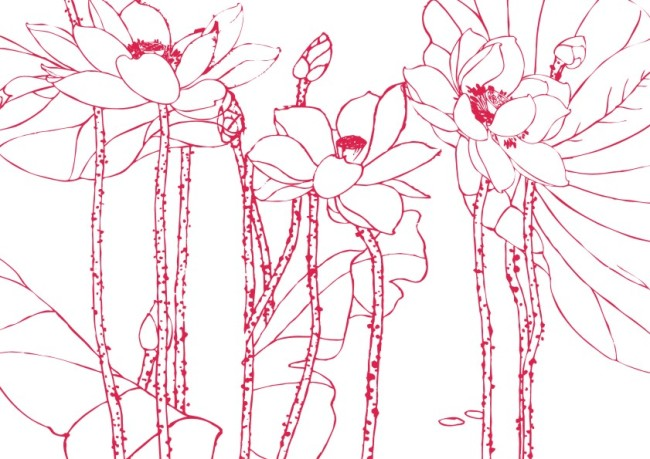 靓丽荷仙花-工笔画