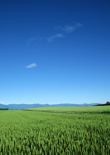 稻田农作物风景
