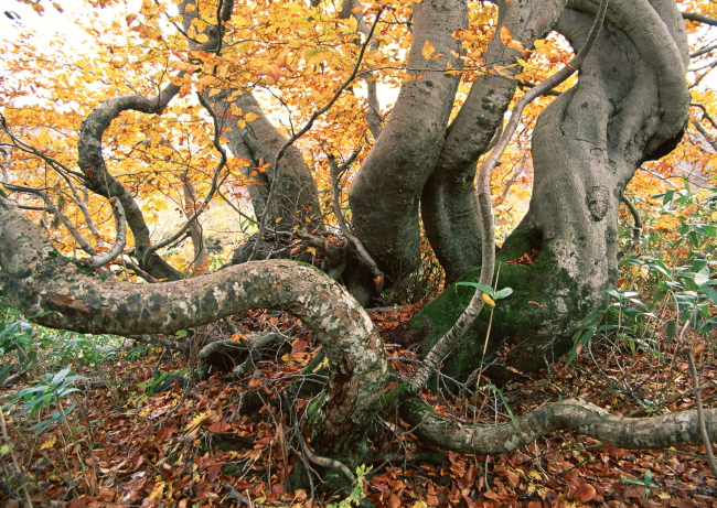 植物 四季 季节 风景 树荫 茂密 树木 树干 树叶 枝叶 自然环境 秋季