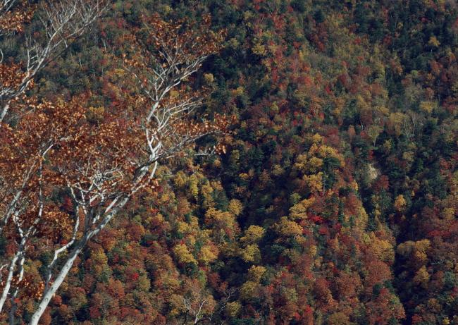 秋天森林树木