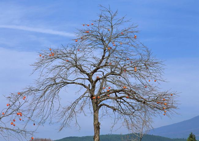 文件详细参数描述 格  式:jpg 图片名称:树木图片