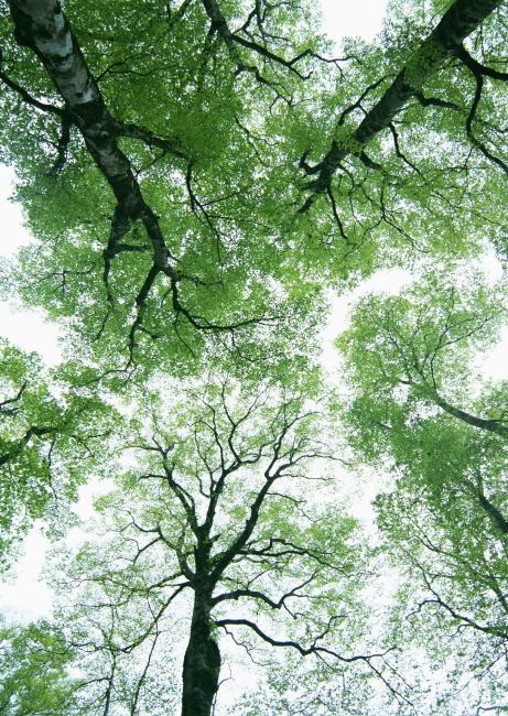大自然 枝叶 绿色植物 野外 树林 春天 树荫 山林 小树 绿色素材 丛林
