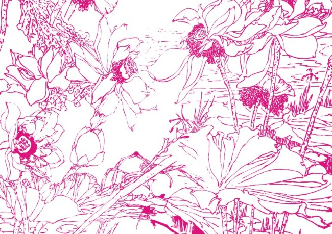 初夏水漫红莲子-手绘画-插画|元素|卡通-其他