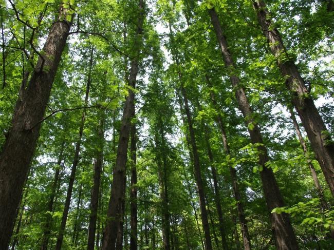 文件详细参数描述;; 森林 树木图片下载; 景物|风景;