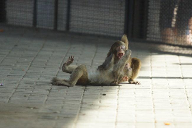 动物图片 野生猕猴