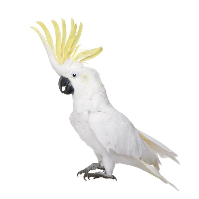 动物 鸟 摄影 桌面