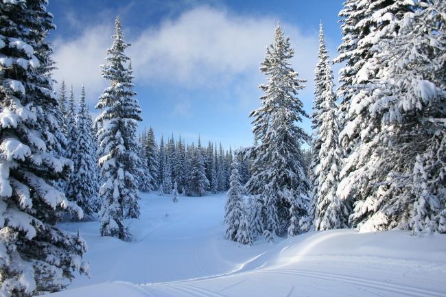 >雪地树木  文件详细参数描述