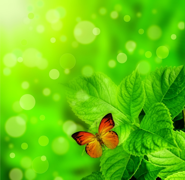 清新绿色动植物图片
