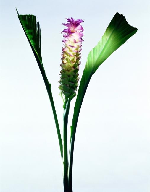壁纸 花 盆景 盆栽 植物 桌面 507_650 竖版 竖屏 手机