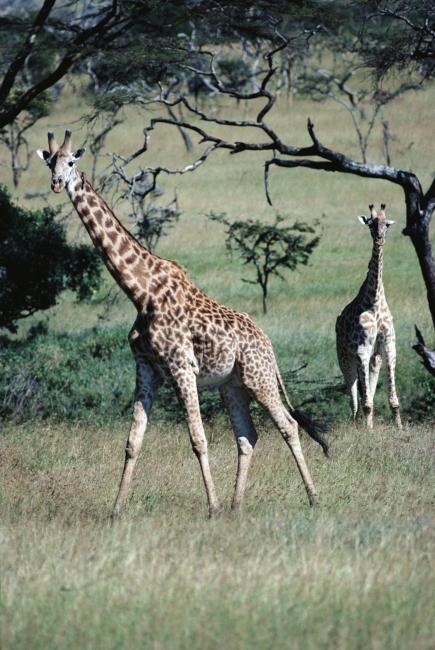 图片名称:野生动物世界