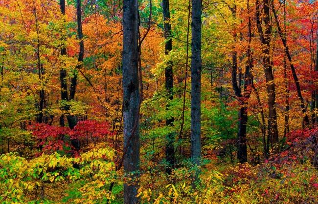 绘画:秋天的树叶—无锡市芦庄实验幼儿园—首页