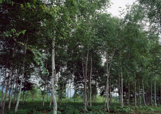 图片名称:树林树木图片