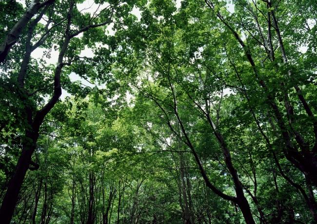 树林树木图片