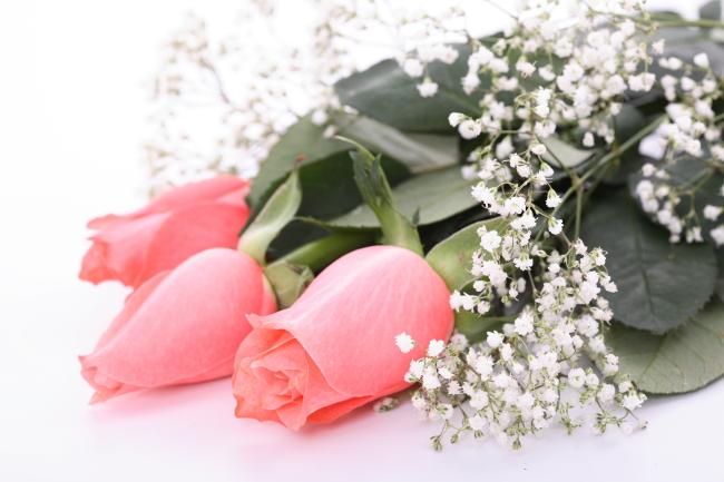 283 兆  浪漫 花朵 花 花芹 玫瑰花 玫瑰 花蕾 满天星 情人节