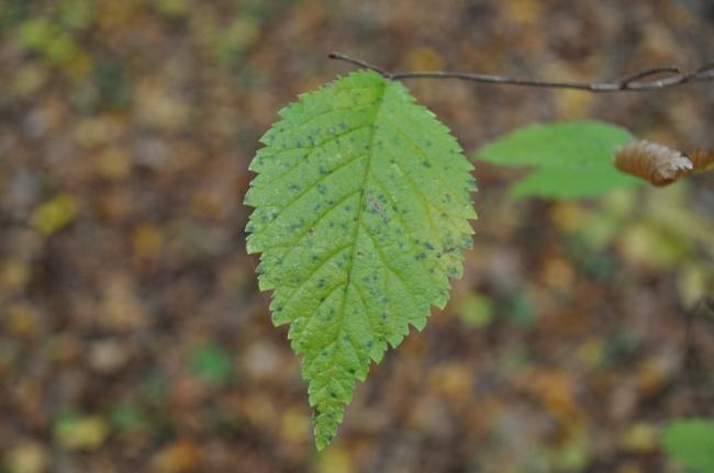 树叶图片下载; 秋天的落叶摄影图;