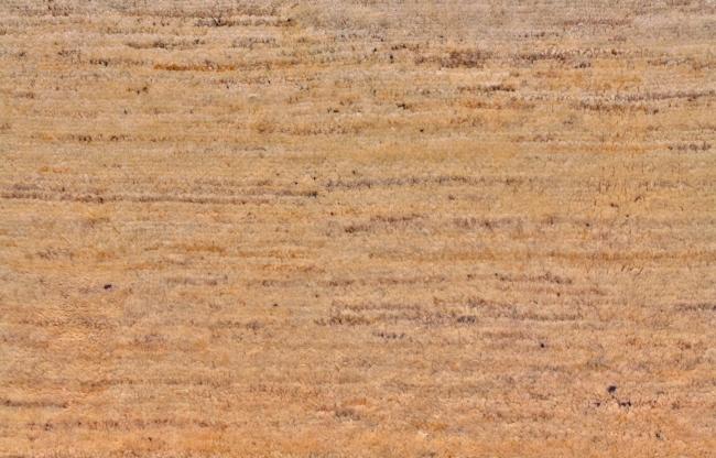 背景底纹 质感 织物 墙纸 布料材质 织布 贴图 材质 毛线 毛料 地毯