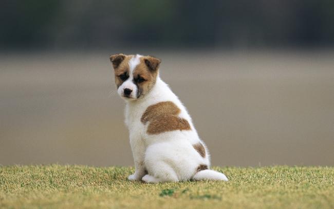 可爱宠物狗