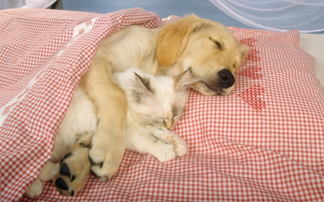 可爱动物睡觉带字